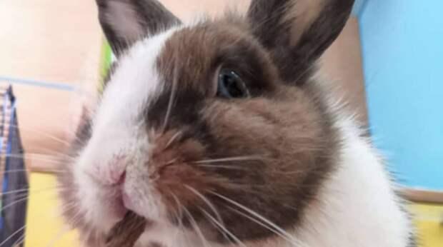 Кролик застрял в банке с едой, но не испугался, а продолжил трапезу…