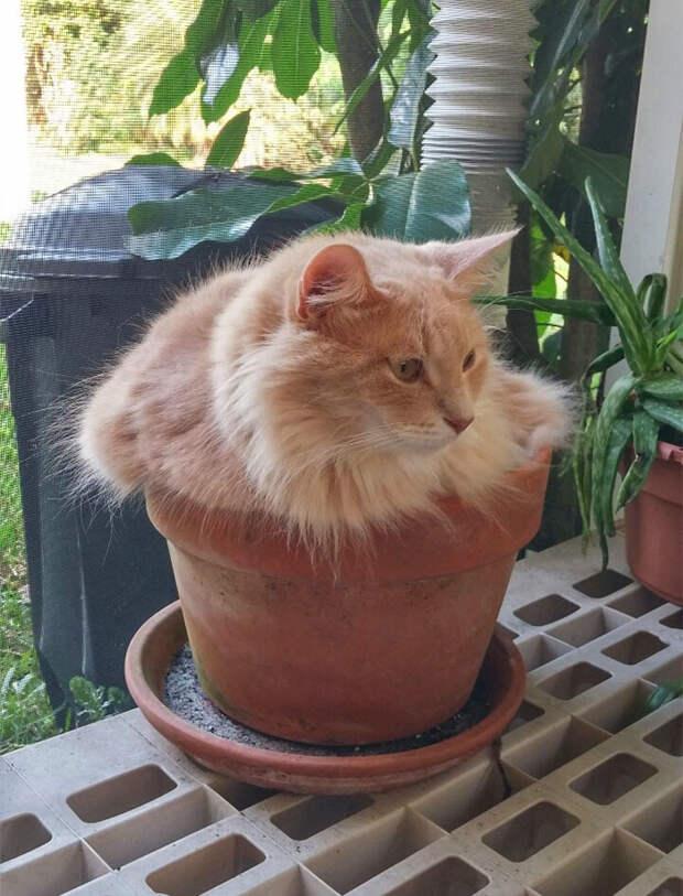 Кот притворяется растением животные, забавно, котопост, коты, кошки, неожиданно, питомцы, юмор