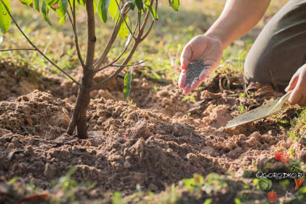 Когда лучше вносить удобрения под деревья