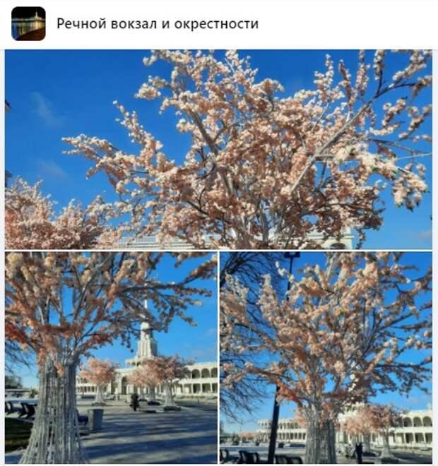Фото дня: «сакура» распустилась в парке Северного речного вокзала