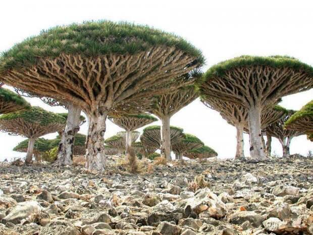 Остров Сокотра в Йемене