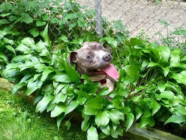 Собаки — это неисчерпаемый источник хорошего настроения