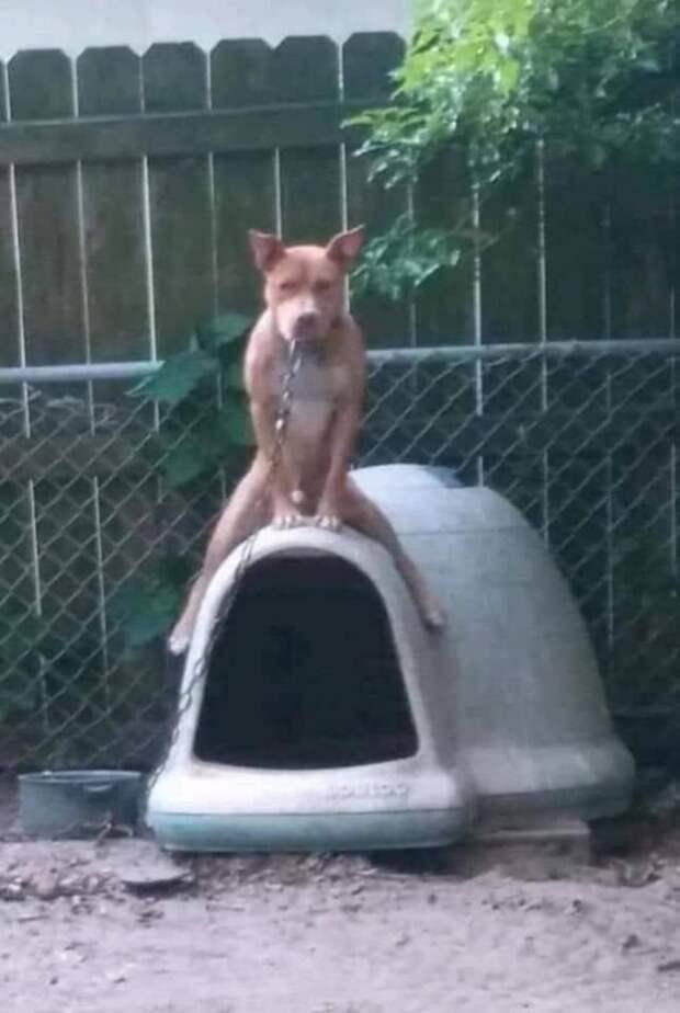 Собака сидит на будке