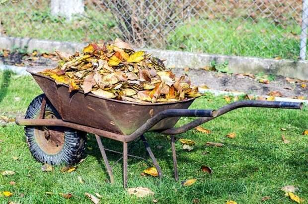 Опавшие листья