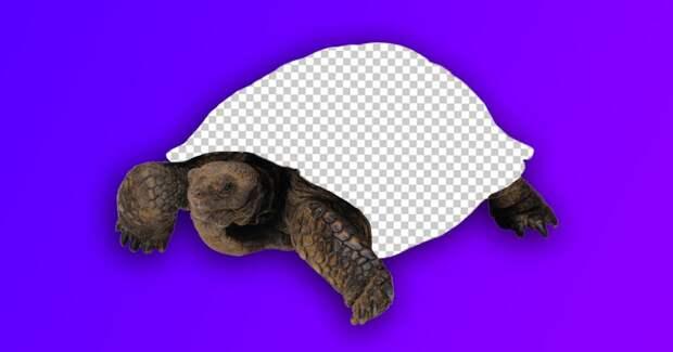 Оказывается, существует черепаха без панциря