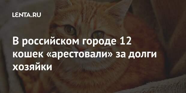В российском городе 12 кошек «арестовали» за долги хозяйки
