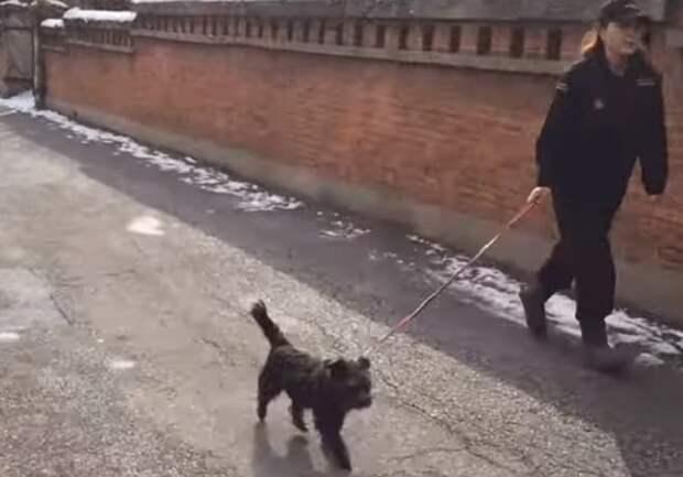 Пес идет