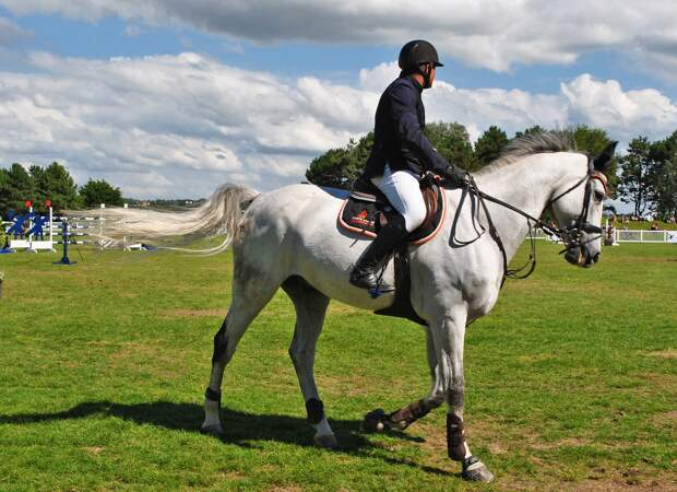 На Сельскохозяйственной планируют открыть конный клуб
