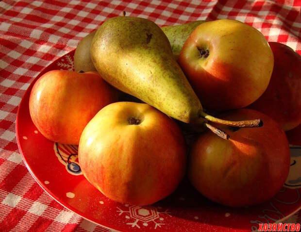 Мы любим яблоки и груши, и не даем осам их съесть