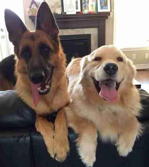 Лучшие друзья не позволят собачьему ограждению встать на их пути