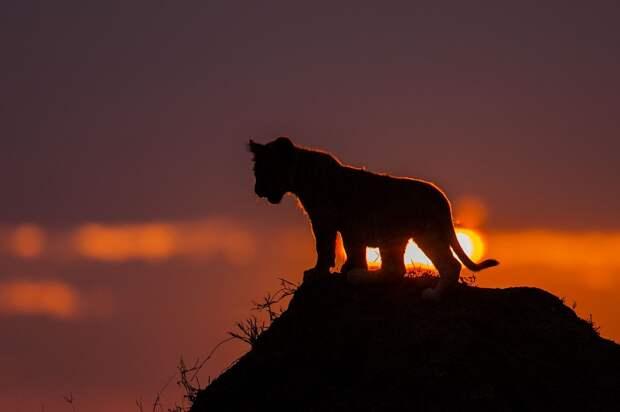 afrikanskie zakaty 2 Потрясающие африканские закаты от Пола Гольдштейна