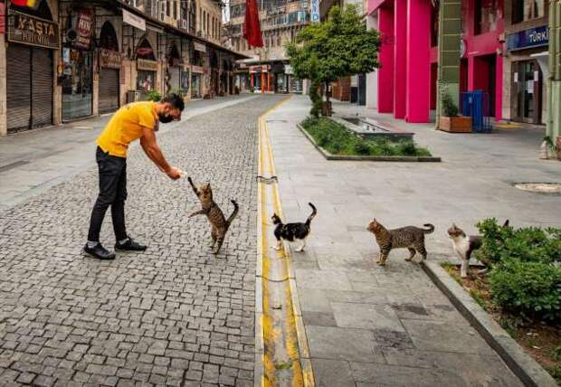 Победители конкурса фотографии Comedy Pet Photo Awards 2020