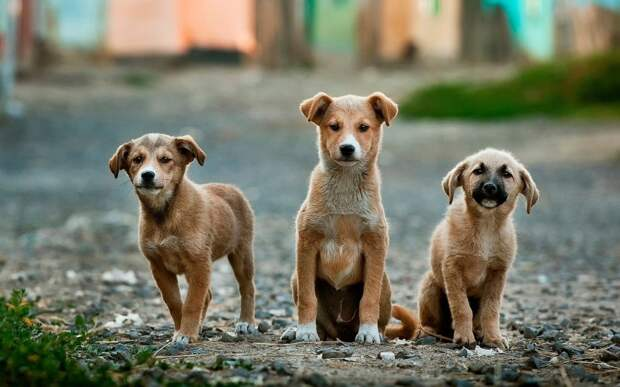 В Саратове возбудили дела из-за массового отстрела собак вместо стерилизации
