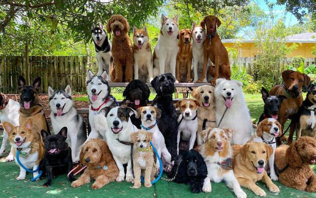 Групповой портрет: центр дрессировки животных прославился фотографиями собак