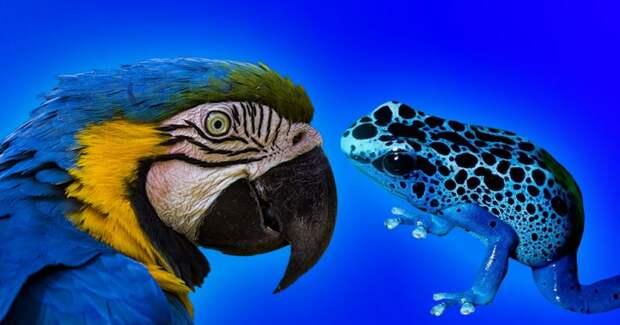 Почему в мире так мало синих животных?