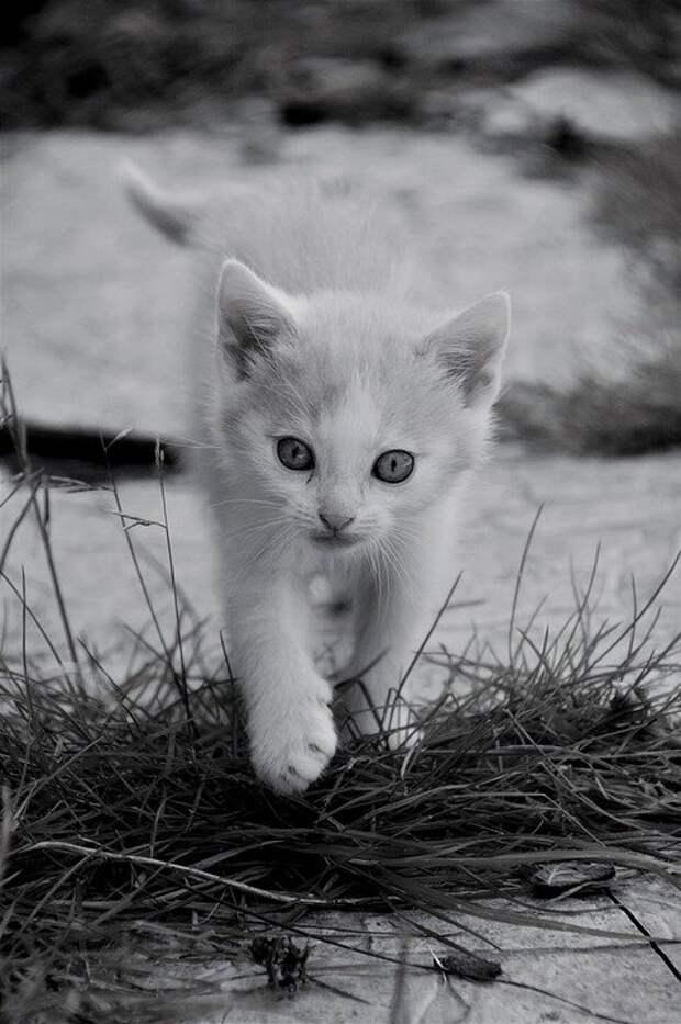 Кошка Выдрой так и осталась. А ведь должна была все изменить