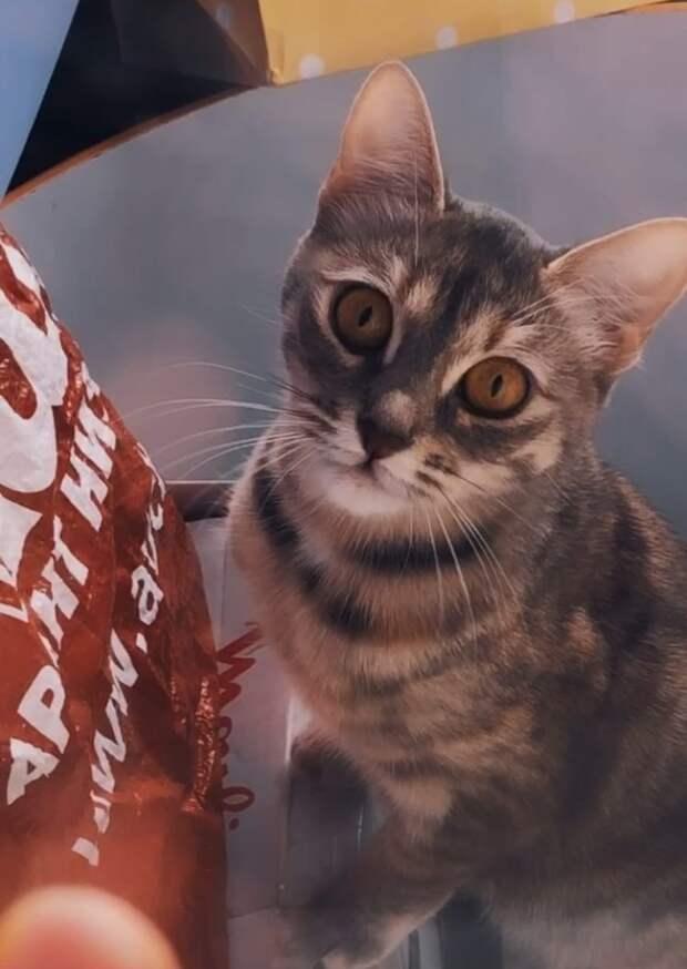 Кошка выжила после падения с 17 этажа на Рождественской