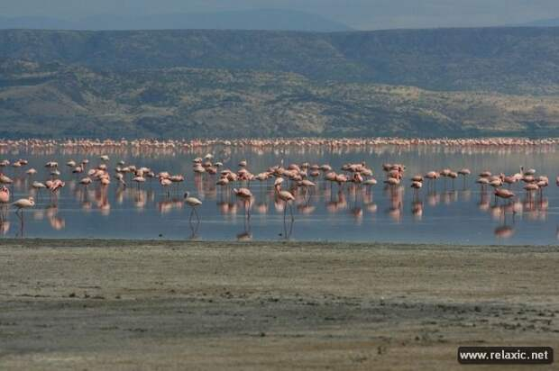Озеро Натрон (12 фото)