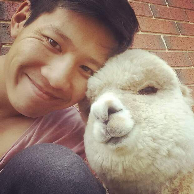 Кажется, мы знаем, какое животное вы теперь хотите завести Instagram, альпака, домашний питомец, животные, милота, фото
