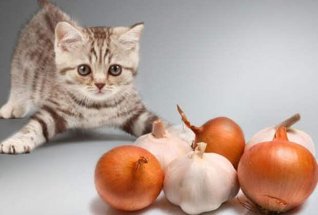 Животным лук не нравится. /Фото: sopurrfect.com