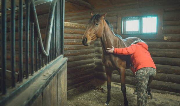 «Кто-то хочет избавиться— ищите врагов»: воВладивостоке обстреливают лошадей