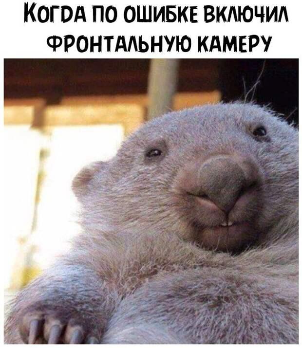 Два приятеля беседуют: -Ты знаешь, а ведь я до свадьбы не спал со своей женой...