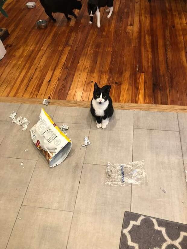 Миссия кота — красть хозяйскую еду! Зря его хозяйка вышла на минутку из комнаты…