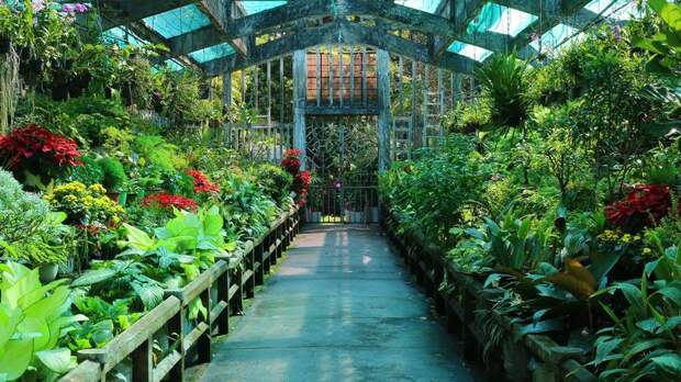 Цветы против пекла и коронавируса: смог ли цветочный бизнес пережить пандемию и жару?