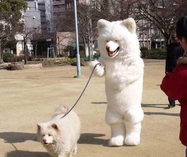 Собачники - одни из самых опасных, и тем не менее смешных представителей человека животные, картинки, прикол, собаки, собачники, фото, юмор
