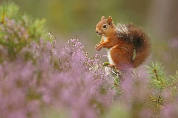 Вдохновляющие работы победителей конкурса фотографии дикой природы Великобритании