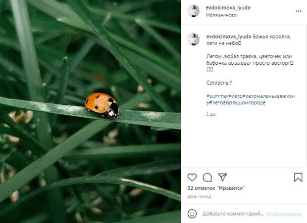 Фото дня: самое милое насекомое засняли в Молжаниновском