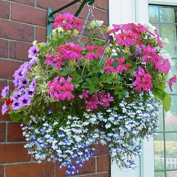 Настоящее украшение для сада: висячие клумбы, которые удивят всех
