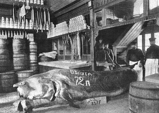 Белуга, выловленная в Каспии. Выставлена в магазине В. Ф. Бобкова на Балчуге. Весила 1152 кг (72 пуда). Весь Мир, история, фотографии