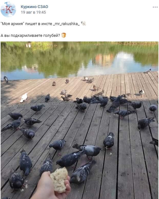Фото дня: голубиная армия