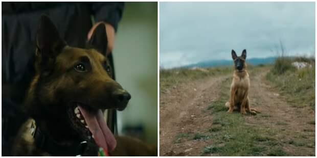 Спустя несколько лет собака вспомнила, кто её бросил аэропорт, видео, животные, обыск, прикол, собака, социальная реклама, юмор