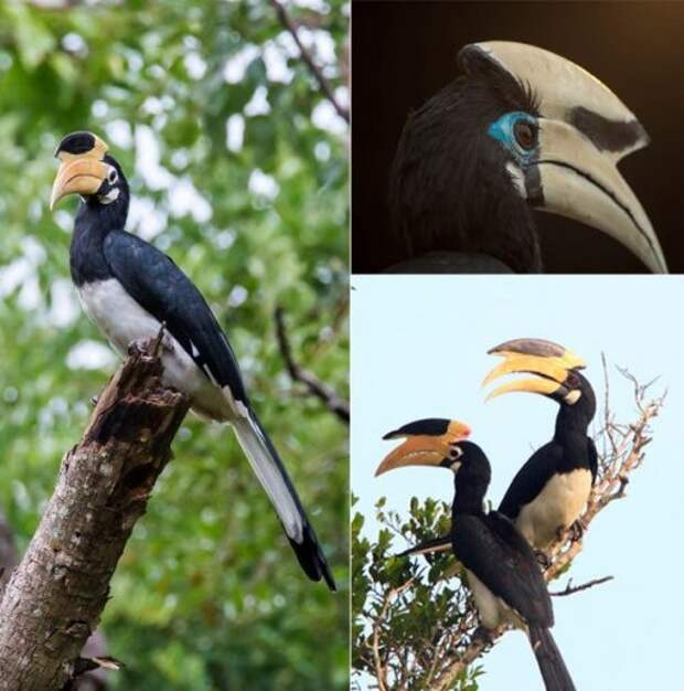 Топ-25: невероятные экзотические птицы, про которых вам будет интересно узнать