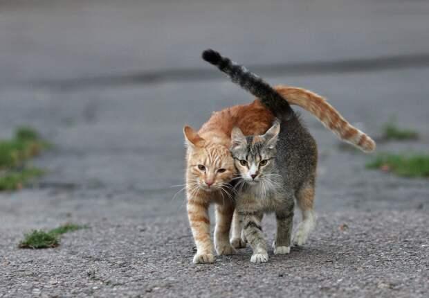 Кошка-клептоманка