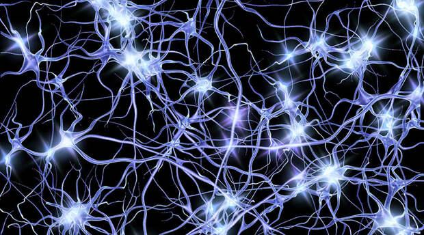 Генетикам из Цюриха удалось повернуть вспять процесс старения стволовых клеток