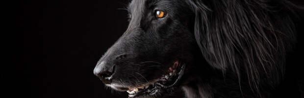 Грузовик протащил собаку, привязанную за лапу, по трассе в Алматинской области