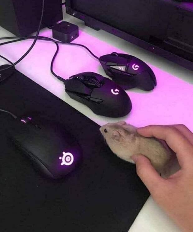 Много мышек на столе