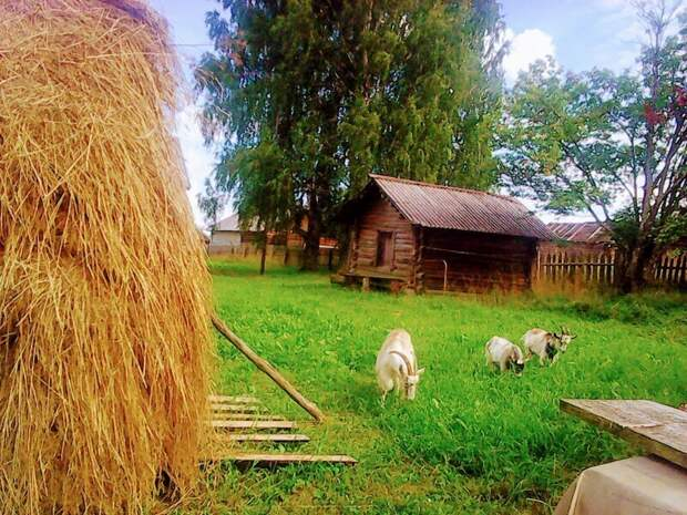 10 ностальгических снимков русской деревни, которые возвращают на мгновение в детство