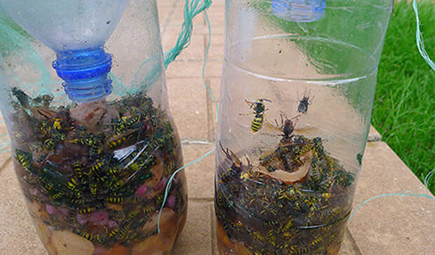 Как легко и просто сделать ловушки для любых насекомых