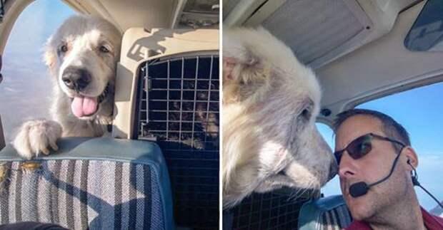 пес Вуди смотрит в окно