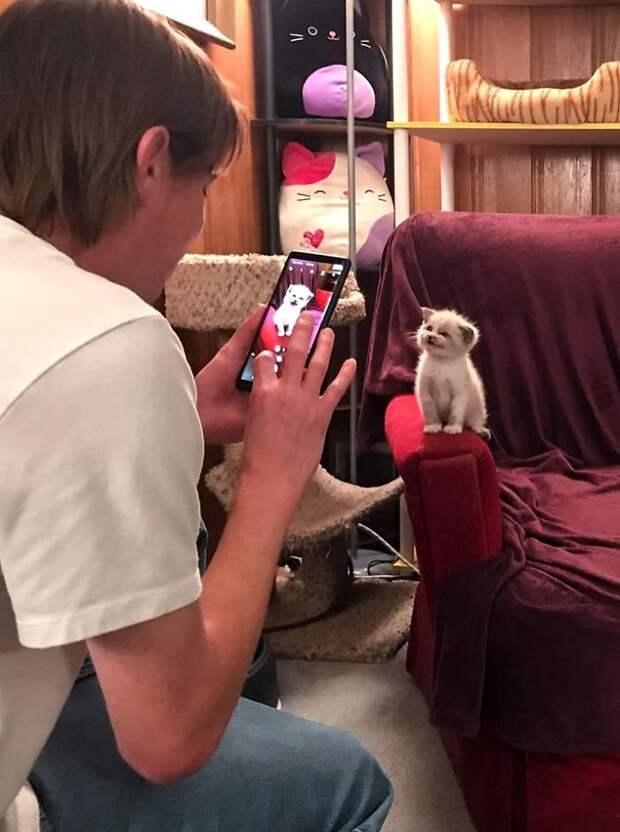Миленький котенок покорил Интернет