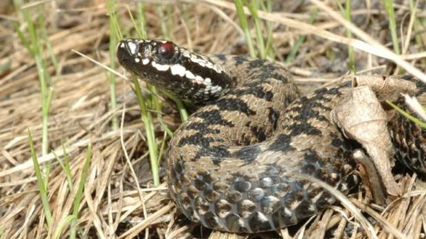 Только без паники: ФАН выяснил, что делать в случае укуса змеи