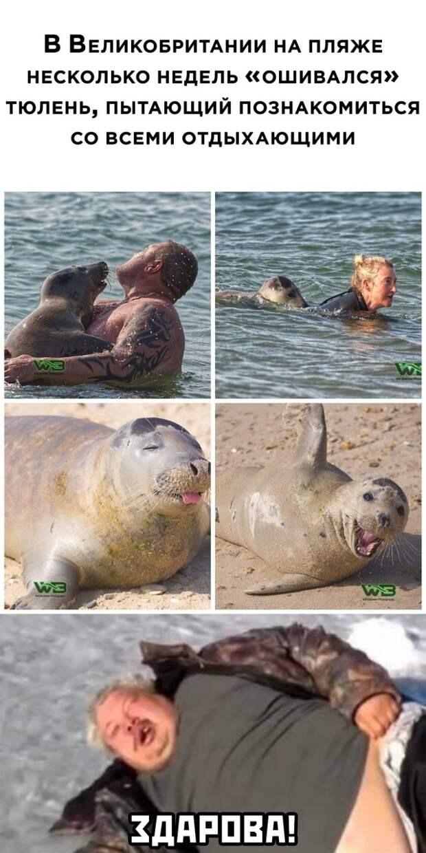 Любвеобильный тюлень
