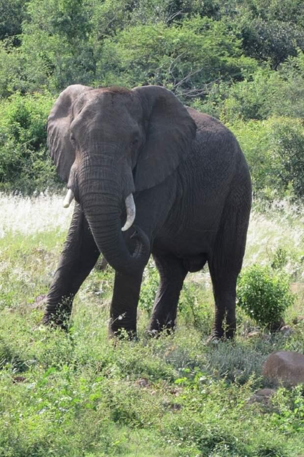 В опустевшую из-за карантина деревушку забрались слоны, которые устроили себе вечеринку с вином