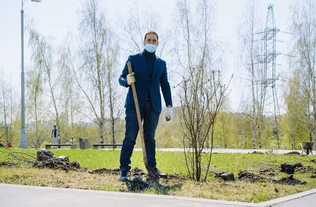 На северо-западе Москвы посадили сирень в память о героях Великой Отечественной войны. Автор фото: Дмитрий Бубонец