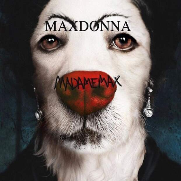 Собака пародирует культовые фотографии Мадонны