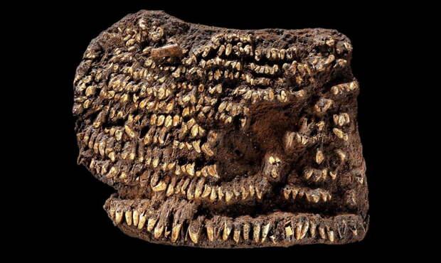 Обнаруженная на территории Германии сумка, датируемая примерно 2500 г. до н.э.
